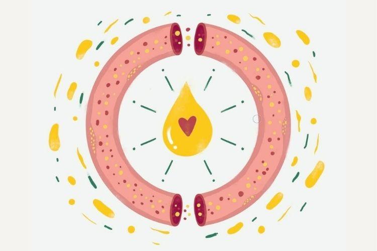 Wysoki cholesterol: co to jest LDL, HDL. Jak obniżyć podwyższony poziom cholesterolu?